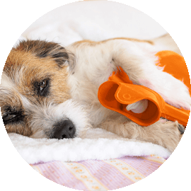 Little dog with hot water bottle